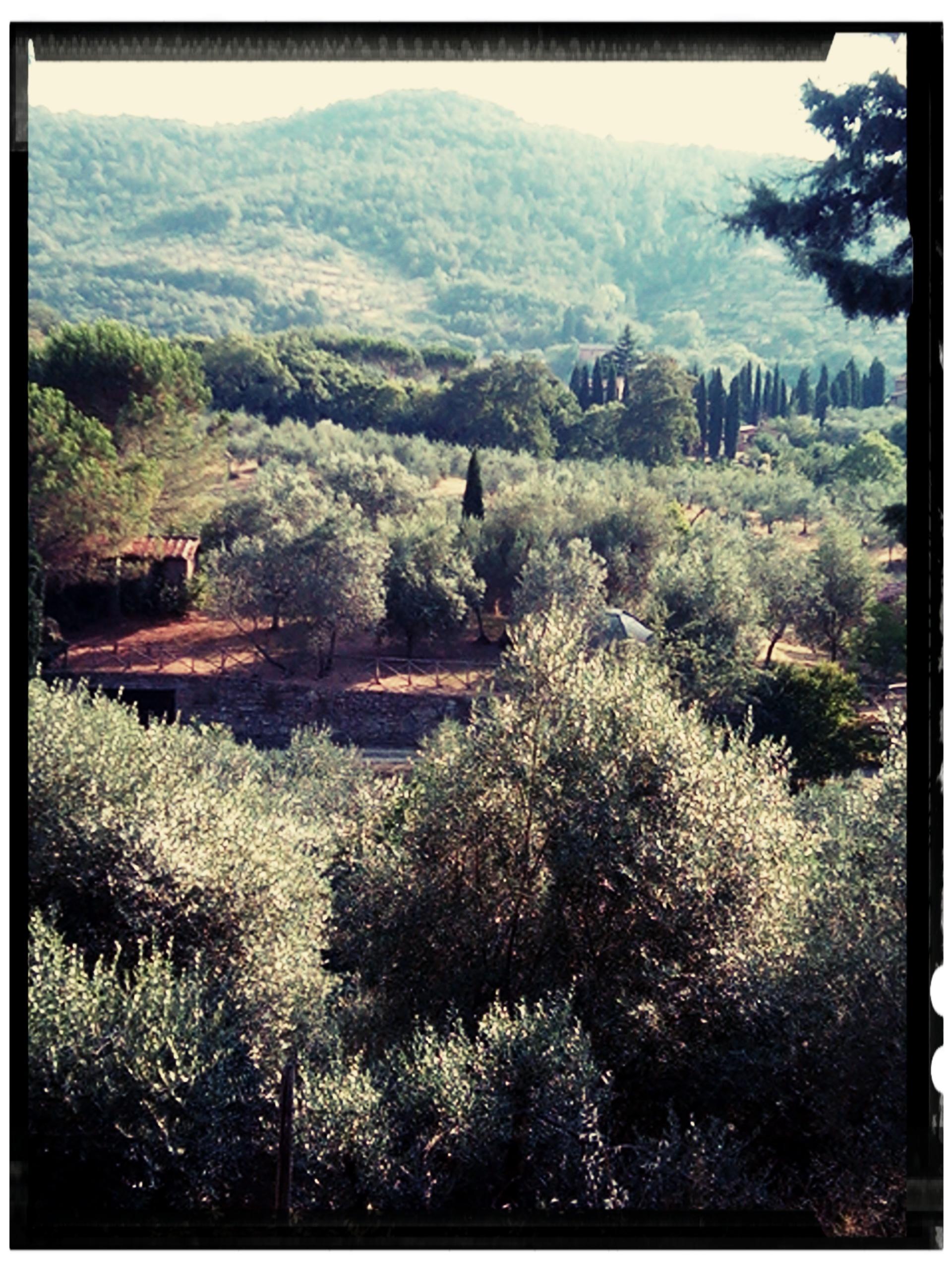 oliviers paciano