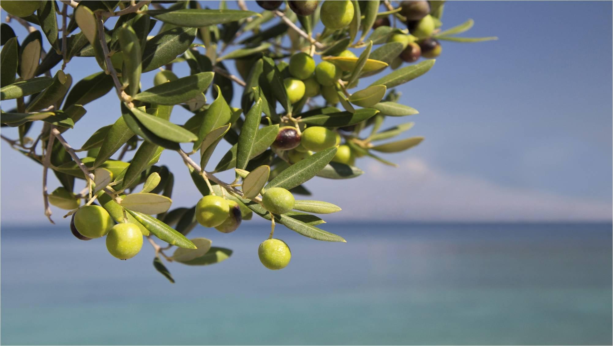 ramo olive pendenti 2